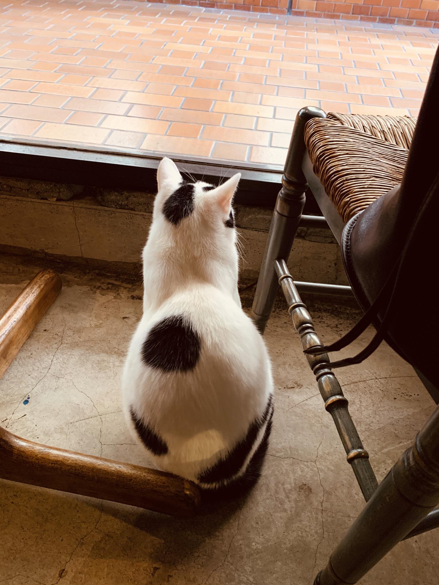 カフェCYANの猫の画像です